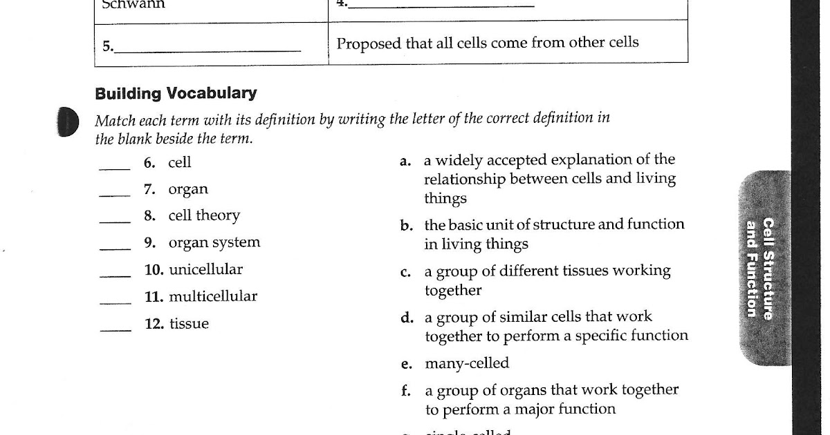 31 Discovering Cell Function Worksheet Answers ...