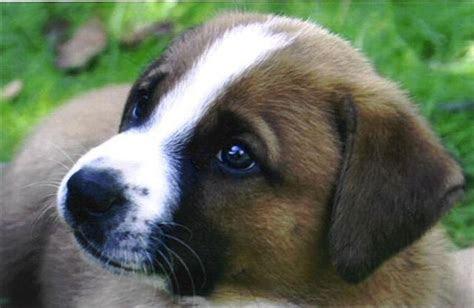 kleine kortharige hondenrassen overzicht kleinste