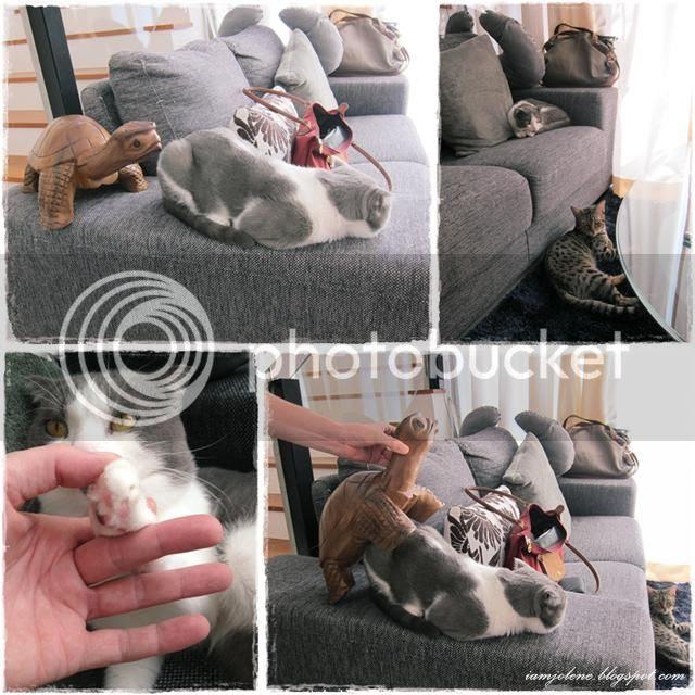 photo collageAB3_zps9a34fb5c.jpg