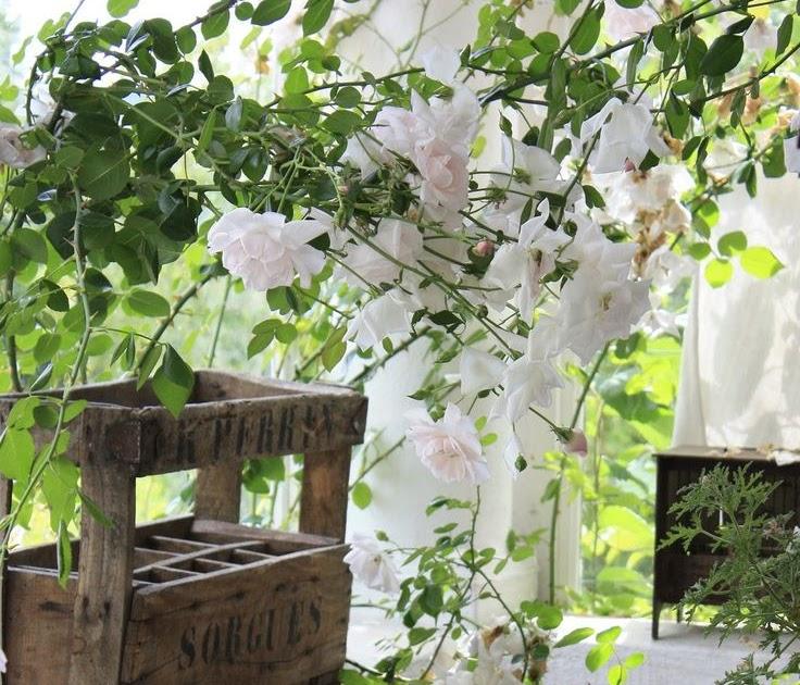 Privatemosaicgarden Rose Garden Dining