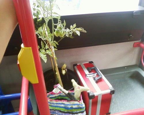 tomato bus