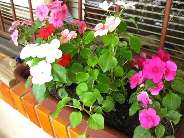 Diário de algodão: Plantando flores