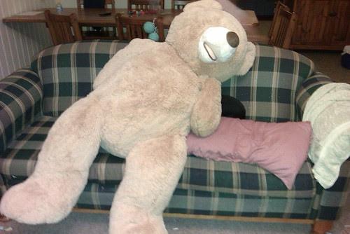 Bear ready for physio :-)