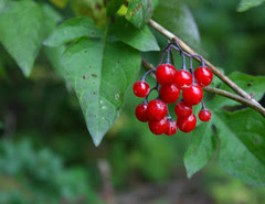 mba red berries