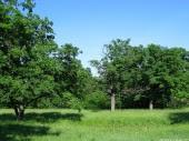 Landscape, 30, Trees