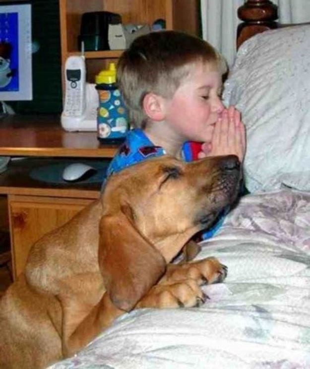 This dog that will pray beside his master before going to bed.   27 Dogs That Will Do Anything For Kids