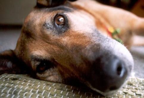 Αποτέλεσμα εικόνας για οδηγός που σκότωσε σκυλάκι