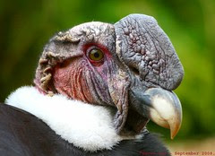 A real Condor moment...