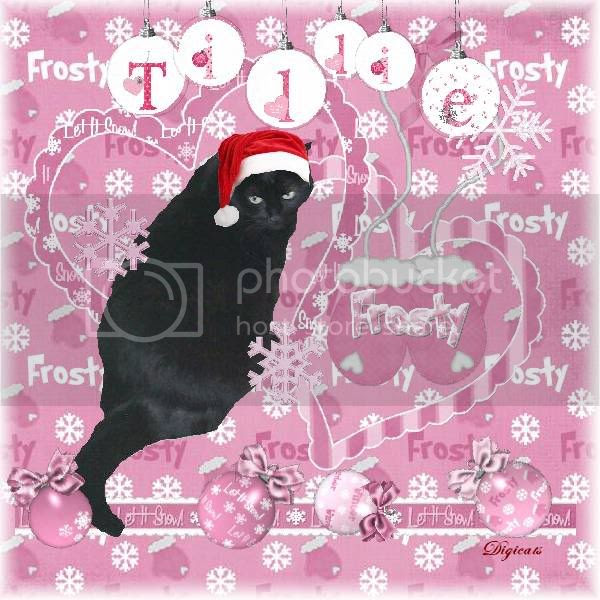 House Panther,Domestic Cat,Winter,Snowcats Project,Happy Holidays,Holiday Glitter