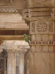 parrots hanging