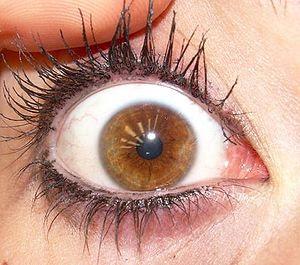 a hazel eye