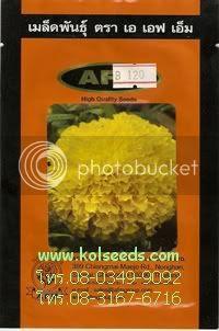 เมล็ดพันธุ์ดอกดาวเรืองจาไมก้า สีเหลือง