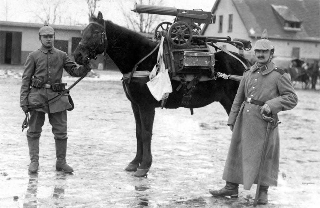 Os animais também lutaram na Primeira Guerra Mundial 03
