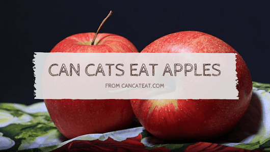 7 Healthy Benefits Of Can Cats Eat Apples | You Should Not Miss It