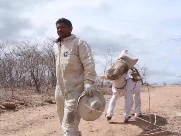 Jumento apicultor colhe 9 litros de mel por dia no sertão do Ceará (Foto: TV Verdes Mares/ Reprodução)