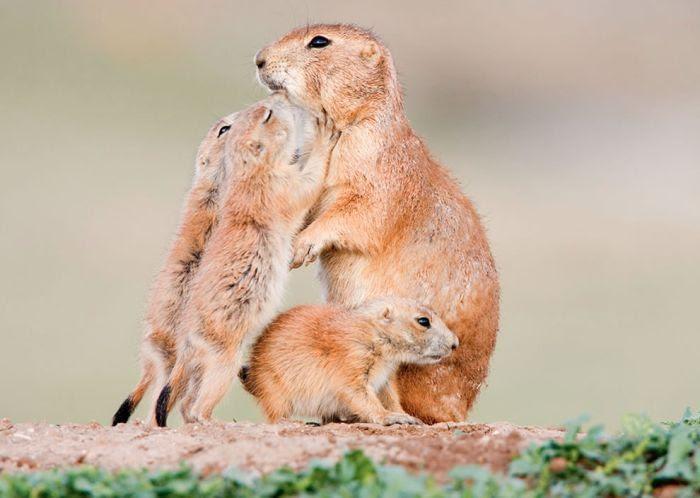 Нежные отношения в семьях