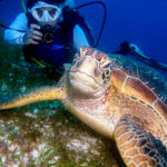 Here I am with a very mellow turtle. Turtle encounters in Dauin and Apo Island were fantastic, as the animals don't seem to be bothered by divers as they busily munch away on seagrass.