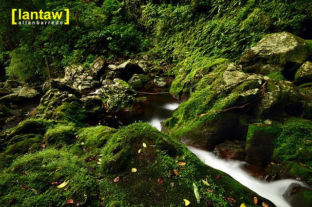 Moss carpeted rocks at Bukal/Bucal Falls aka Kilangin Falls