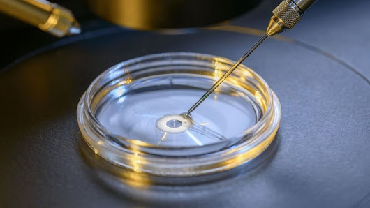 DNA surgery on embryos removes disease