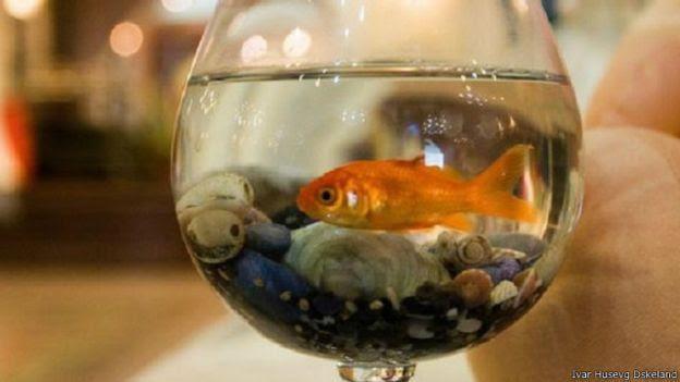 سمك الزينة