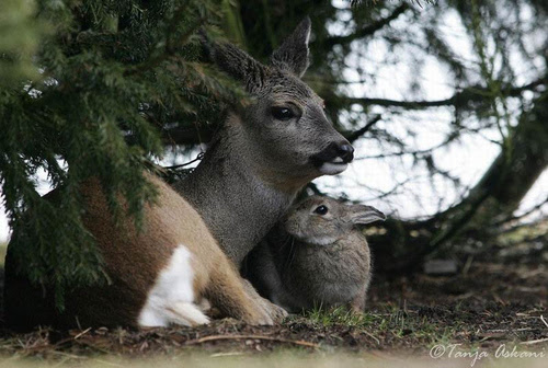 Friendship animals.  Deer and hare