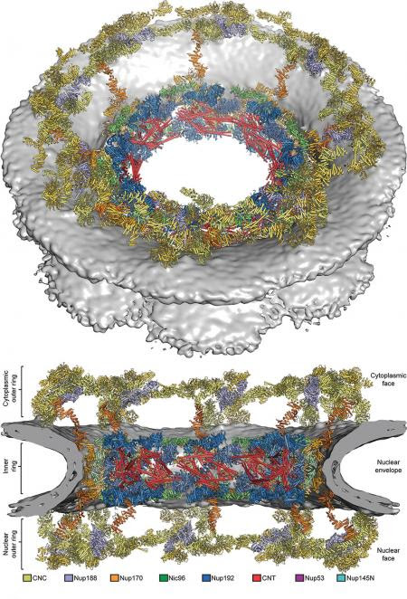 Biochemists Solve the Structure of Cell's DNA Gatekeeper | Caltech