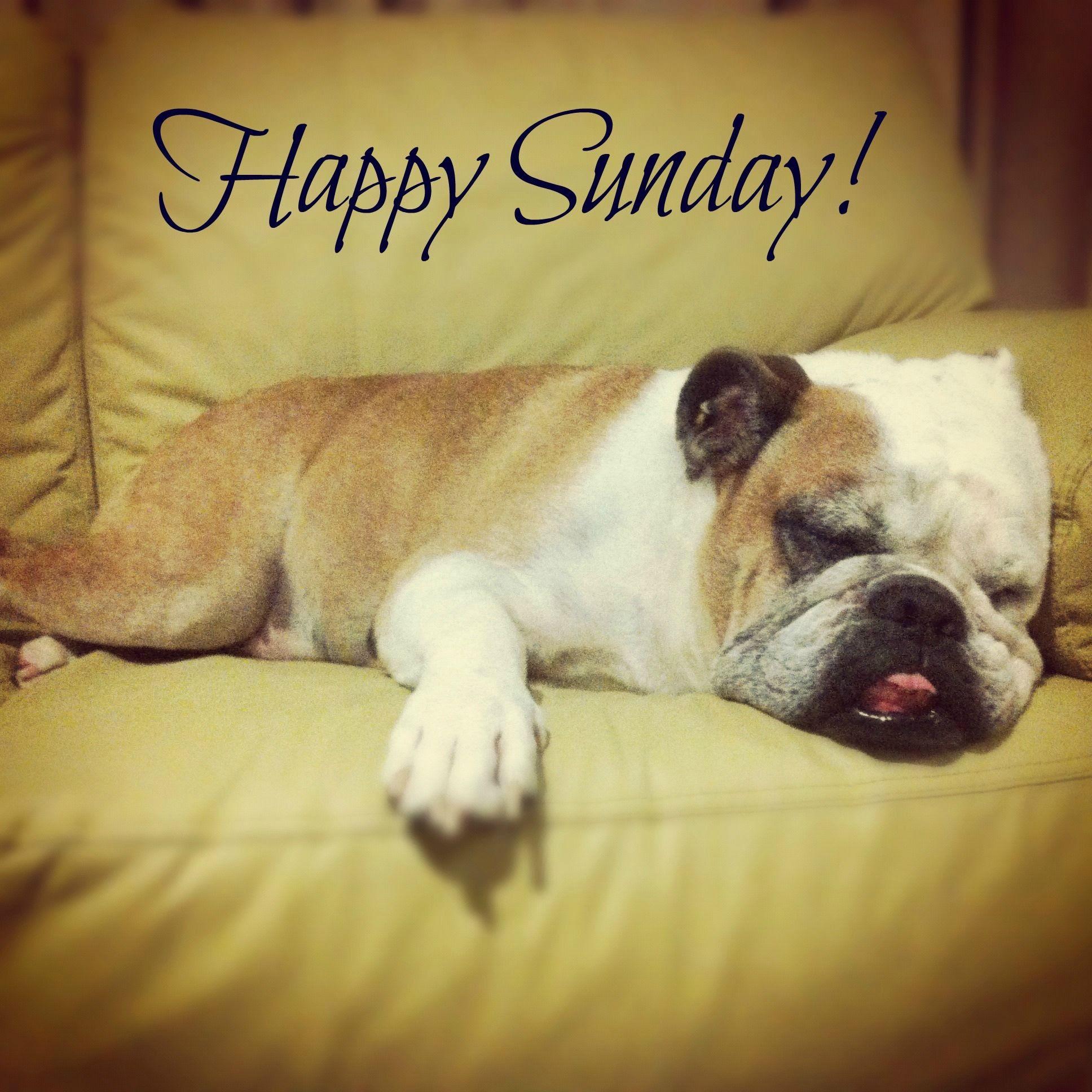 Bildergebnis für Happy Sunday
