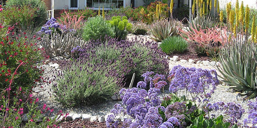 Navigating sustainable landscaping