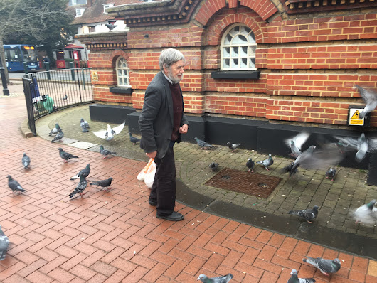 COMMENT: Stop feeding pigeons and helping these flying rats to spread their filth