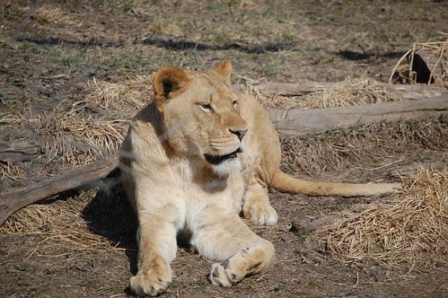 Zoo Animals (32)