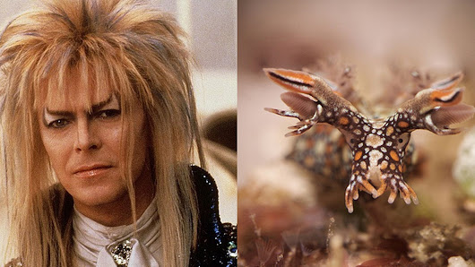 This blog comparing pictures of David Bowie and sea slugs makes total sense