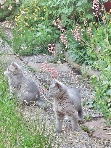 first time in garden