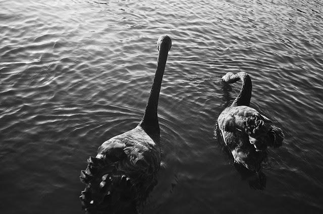 The Ducks - Happiness