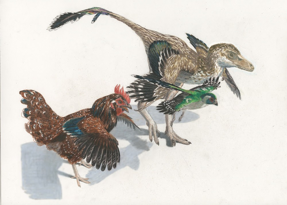 Dinossauros e pássaros, entenda a relação (Foto: Reprodução)