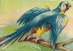 oiseauchromos 5