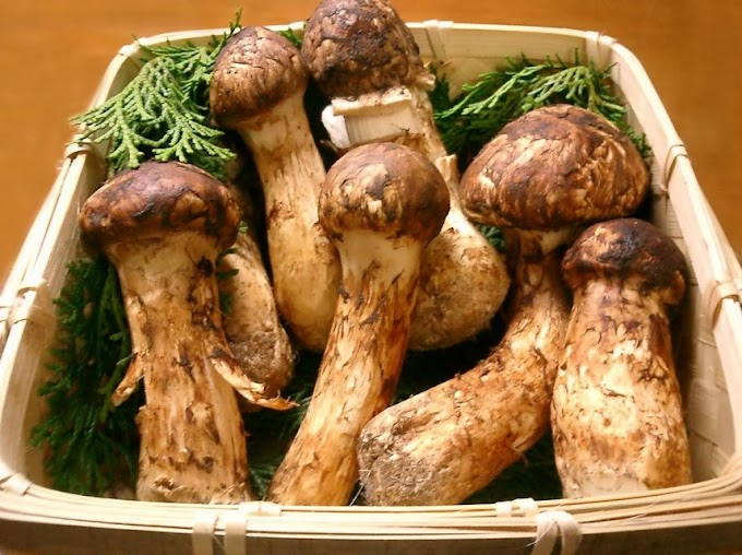 Why are matsutake mushrooms so expensive?