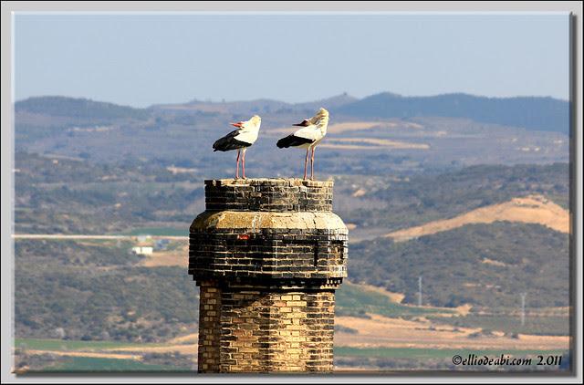 2 Cigüeñas bailarinas