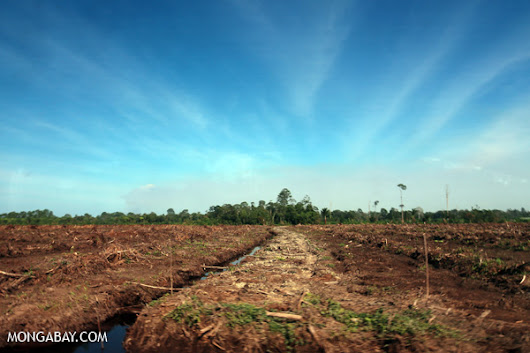 Why palm oil expanded, and what keeps it growing