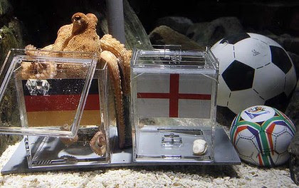 "A two year-old octopus ""Paul"", the so-called ""octopus oracle"" predicts Germany's victory in their World Cup last 16 clash against England."