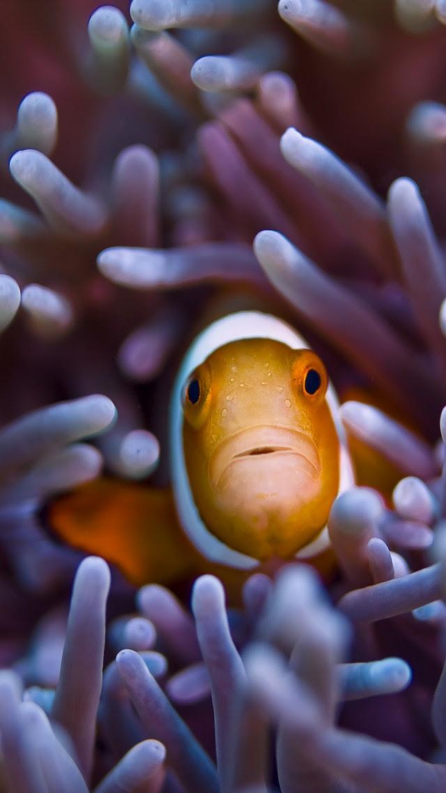 Wallpaper Clownfish, 5k, 4k wallpaper, Gili, Island, Bali ...