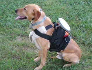 remote-control-dog
