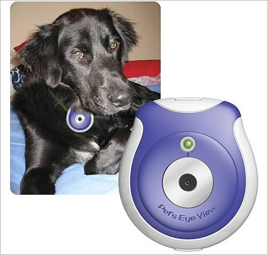Pets Eye View Digital Camera