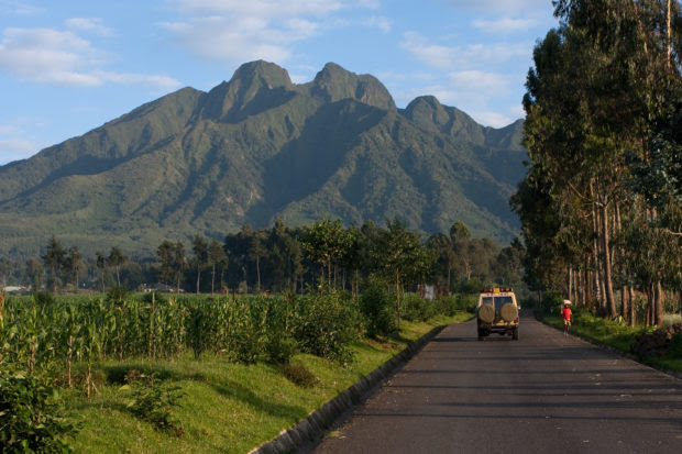 Mountain Gorilla Photo Safaris in Uganda & Rwanda