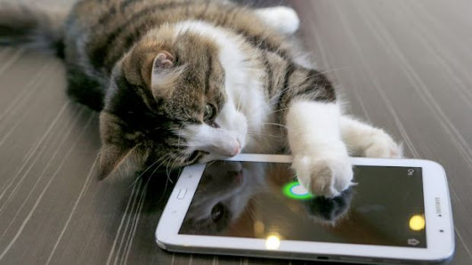Cats and dogs the latest family members to play iPad games