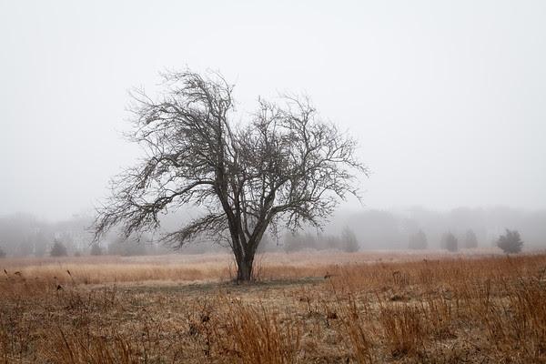 Edgartown News, Sweetened Water Tree