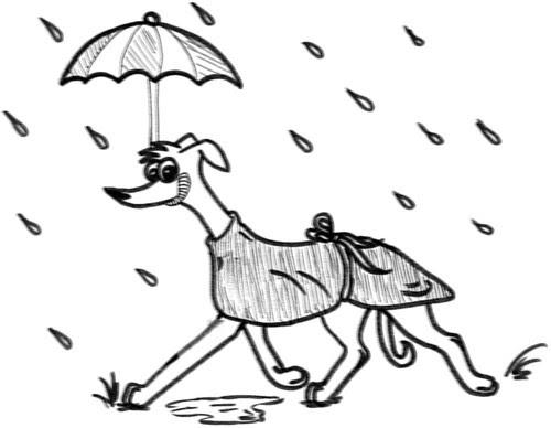 Comic-Whippet-Allwetterhund