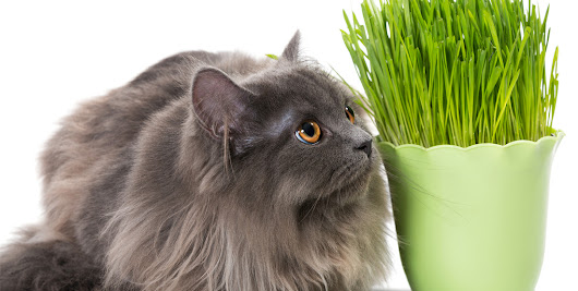 Pet-Friendly Houseplants That Won't Hurt Your Cats and Dogs - Hinman Construction Remodeling and Home Construction Company Saratoga NY