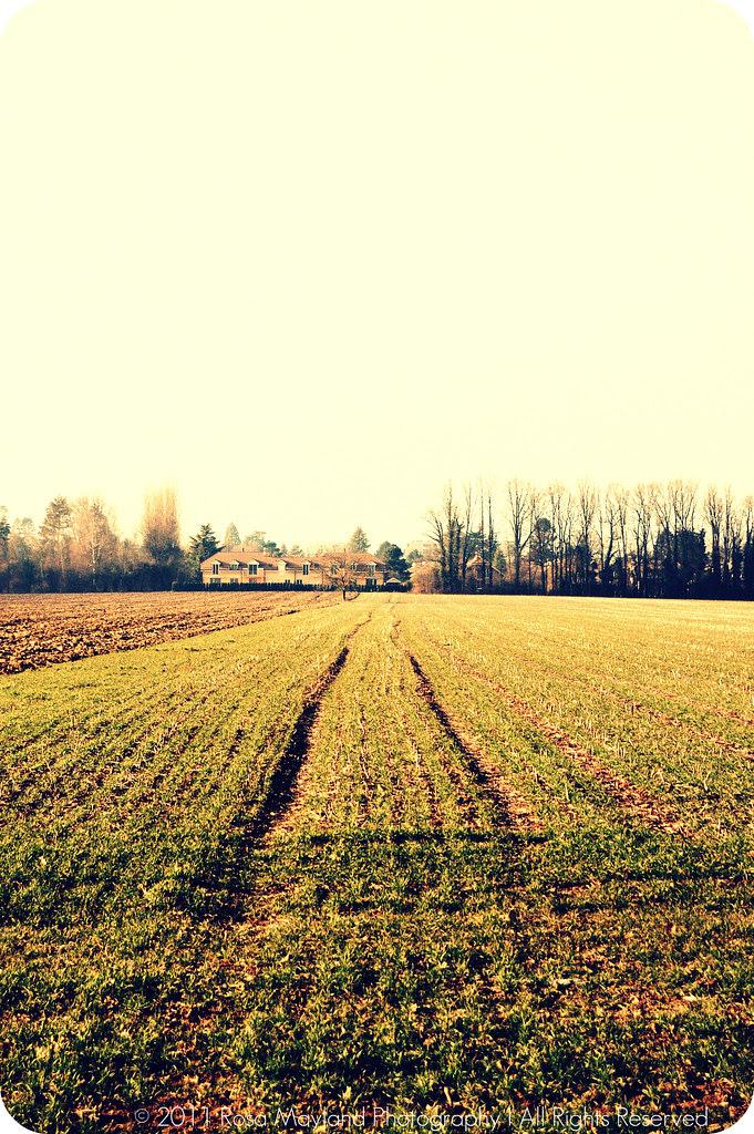 Spring Field 1.1 bis