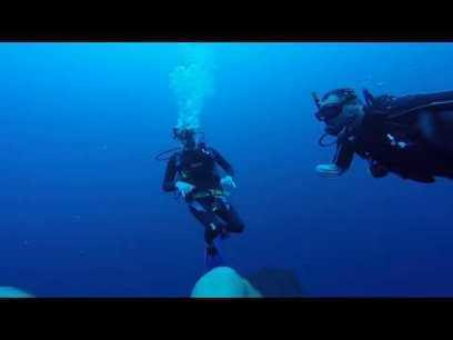 Deep and Dolphins - Diving in Utila With UDC | PADI Scuba Instructor internships