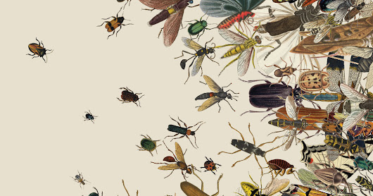 The Insect Apocalypse Is Here